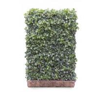 Hedera Green Ripple 180